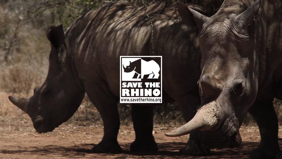 Art-Series Rhinoceros